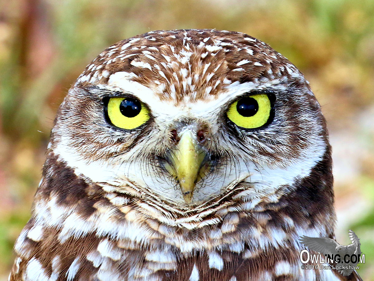 1 - Owl Picture