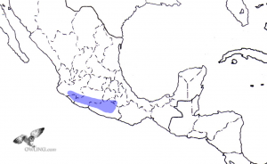 Balsas Screech-Owl Range Map