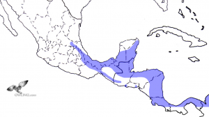 Black-and-white Owl Range Map