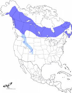Boreal Owl Range Map