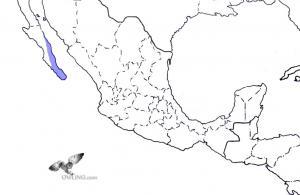 Cape Pygmy-Owl Range Map