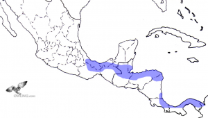 Central American Pygmy-Owl Range Map