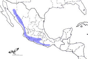 Colima Pygmy-Owl Range Map