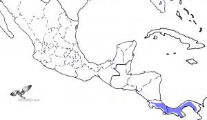 Costa Rican Pygmy-Owl Range Map