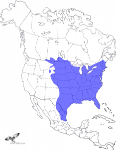 Eastern Screech-Owl Range Map