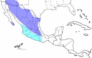 Elf Owl Range Map