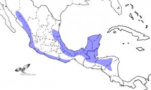 Guatemalan Screech-Owl Range Map