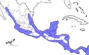 Mexican Wood Owl Range Map