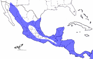 Ridgway's (Ferruginous) Pygmy-Owl Range Map