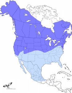 Short-eared Owl Range Map