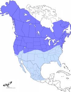 Short-eared Owl Range Map