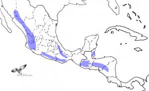Stygian Owl Range Map