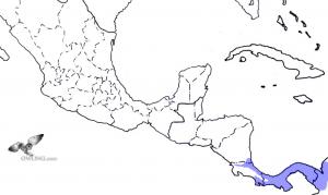 Vermiculated Screech-Owl Range Map