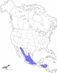 Whiskered Screech-Owl Range Map