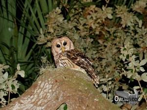 Orlando, Florida 1/2007