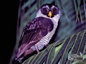 Palenque, Mexico 3/2002