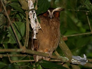 La Selva, Costa Rica 4/2008