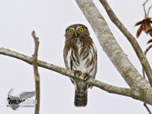 Tarcoles, Costa Rica 3/2011
