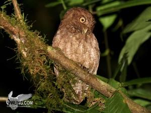 La Selva Biological Reserve, Costa Rica 3/2008