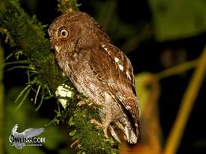 La Selva Biological Reserve, Costa Rica 3/2011