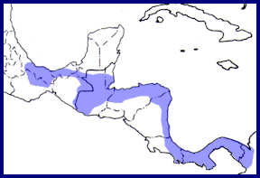 range map central american pygmy