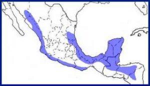 range map Guatemalan screech owl