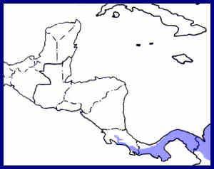 range map for tropical screech owl
